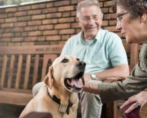 Boswijk - Hond